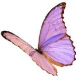 butterfly.ashx